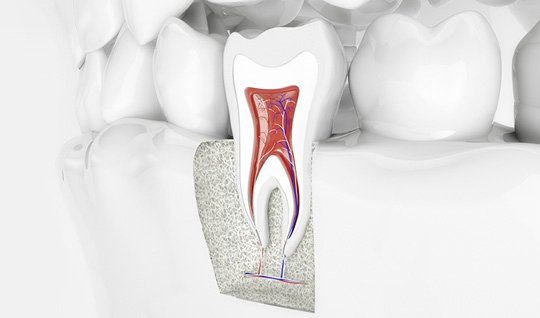 Aufbau eines Zahns mit Zahnwurzel – Endodontie